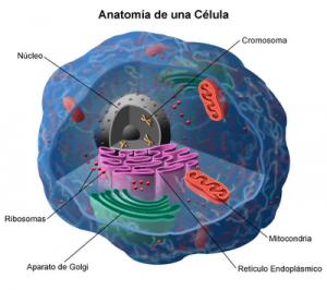la-celula-humana